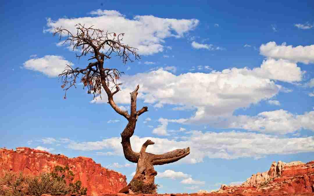 weenie roast | eagle tree | Holistic Health Center