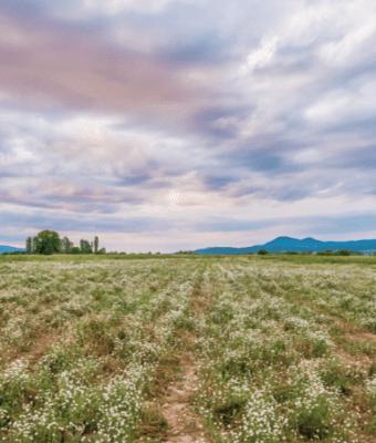 essential oils | balkan botanical field | holistic health center | peoria | illinois