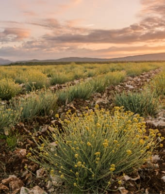 essential oils | dalmatia aromatic farm | holistic health center | peoria | illinois