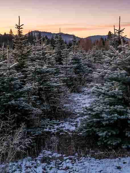 essential oils | snowy pine | holistic health center | peoria | illinois