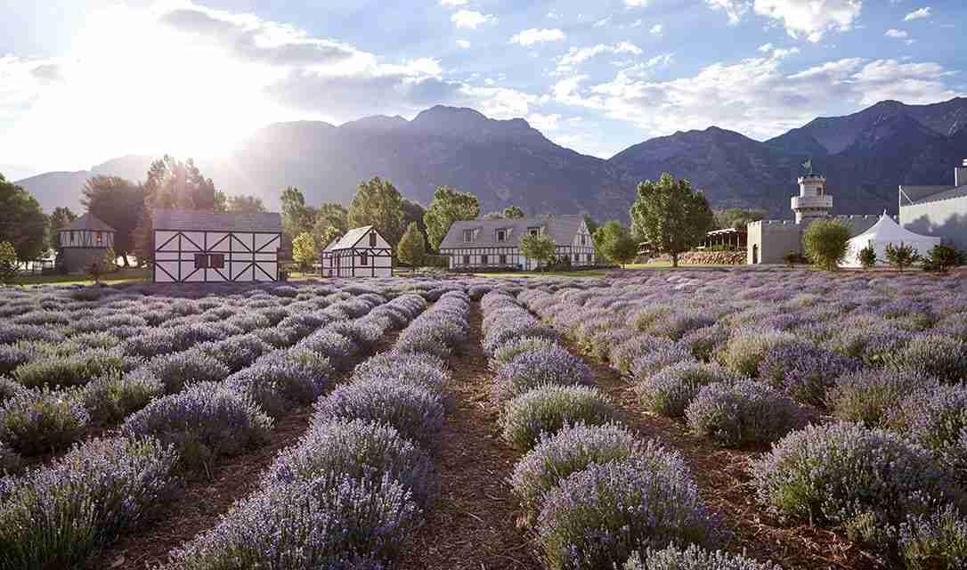 essential oils | lavender field | holistic health center | peoria | illinois