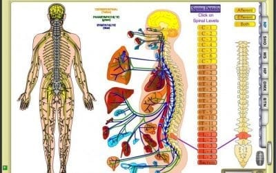 Henry Winsor | A Chiropractic Discovery